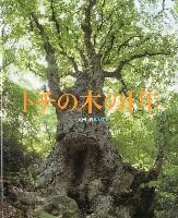 トチの木の1年
