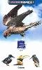 新ポケット版学研の図鑑5 鳥
