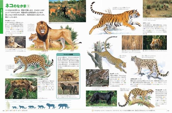 小学館の図鑑NEO                            小学館の図鑑NEO 動物