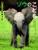 サバンナを生きる ゾウのこども