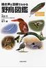 鳴き声と羽根でわかる野鳥図鑑 鳴き声QRコード付