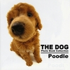 THE DOG Poodle