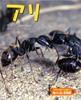 ドキドキいっぱい!虫のくらし写真館 アリ