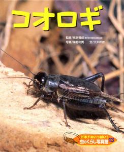 ドキドキいっぱい!虫のくらし写真館(13) コオロギ