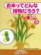 お米なんでも大百科(3) お米ってどんな植物だろう?