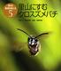 虫から環境を考える(5) 里山にすむクロスズメバチ