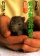 森の獣医さんの動物日記(3) 写真記野生動物診療所