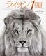 ライオン1頭
