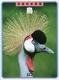 学習科学図鑑 鳥