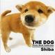 THE DOG Shiba