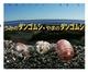 ちしきのぽけっと(9) うみのダンゴムシ・やまのダンゴムシ