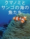 ちしきのぽけっと(5) クマノミとサンゴの海の魚たち