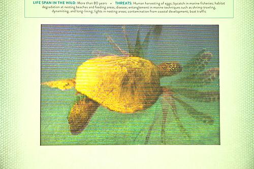 OCEAN(オーシャン洋書版)の商品画像3
