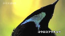 MOVE公式サイトではさらに多くのDVDサンプル映像をご覧いただけます