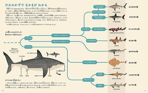 サメってさいこう!