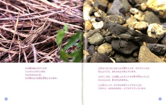 こん虫のふしぎ(2) こん虫のかくれんぼ