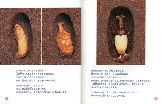 こん虫のふしぎ(4) こん虫のへんしん