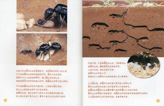 こん虫のふしぎ(5) こん虫のおやこ