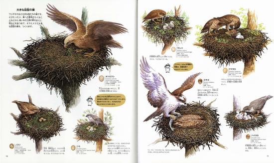 日本の鳥の巣図鑑 全259