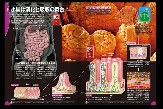 学研の図鑑  LIVE 第9巻 人体