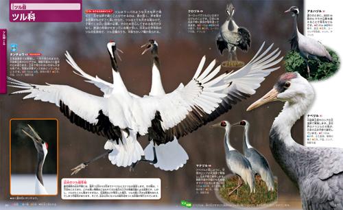 講談社の動く図鑑 MOVE 鳥