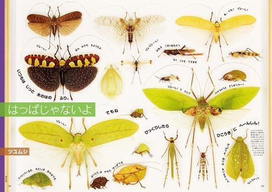 小学館の図鑑NEO 本物の大きさ絵本『原寸大昆虫館』