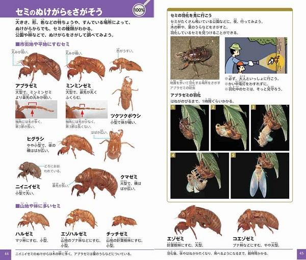 小学館の図鑑 NEO POCKET −ネオぽけっと−昆虫
