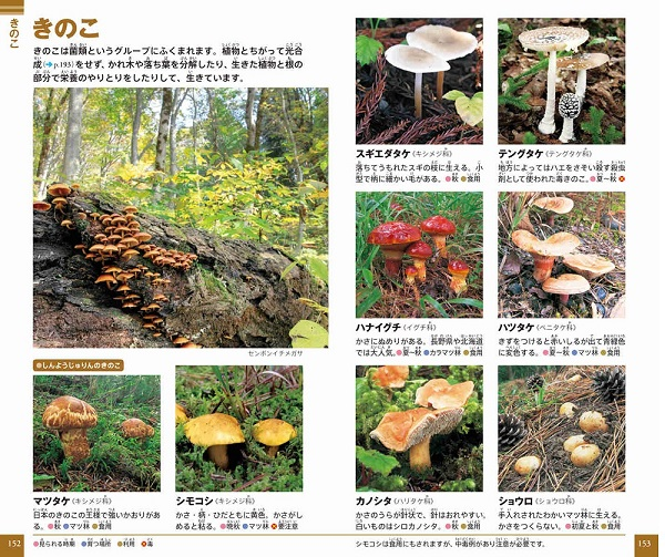 小学館の図鑑 NEO POCKET −ネオぽけっと−植物