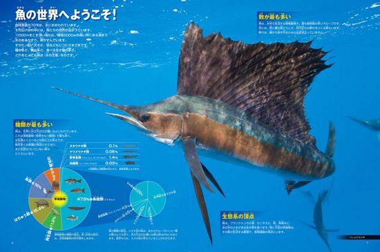 新版 小学館の図鑑NEO 魚 DVDつき