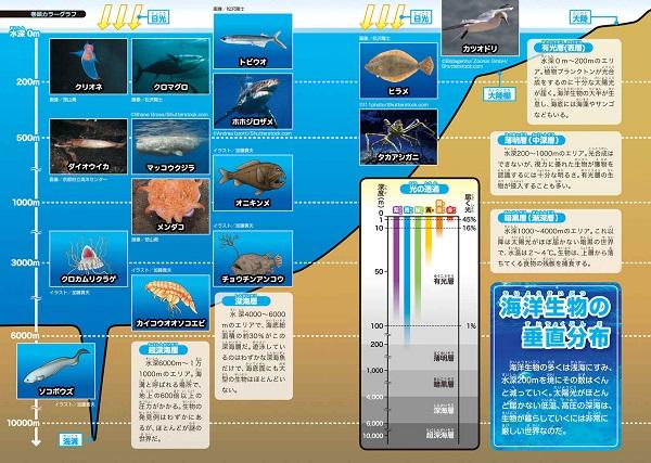 ドラえもん科学ワールド 生物の源・海の不思議