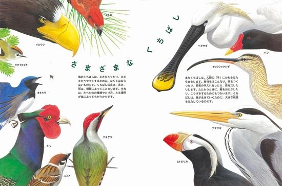 ちしきのぽけっと(4) 鳥のくちばし図鑑 たべる・はこぶ・つくる