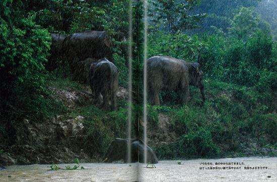 ちしきのぽけっと(14) 象のわたる川