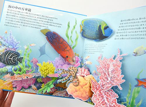 海の生き物たち