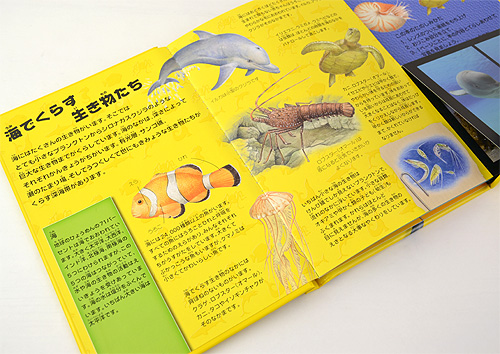 3Dでびっくり!海の生き物
