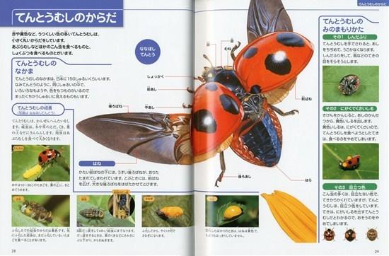 フレーベル館の図鑑ナチュラ1 こんちゅう
