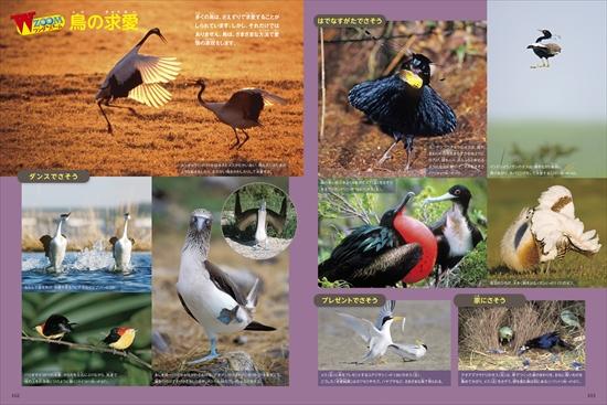 ポプラディア大図鑑WONDA 鳥