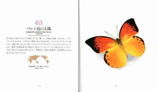 世界のチョウ