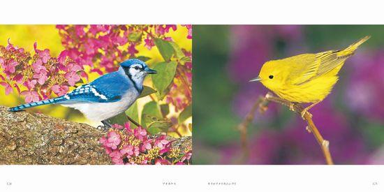 世界の美しい鳥