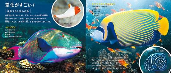 きれいですごい魚