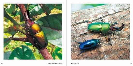 世界の美しい虫