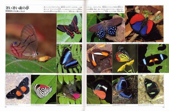 世界昆虫記