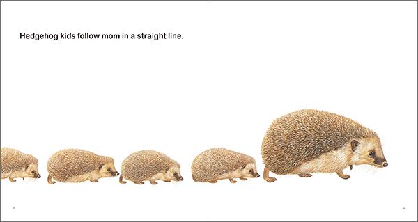 Animal Moms どうぶつのおかあさん