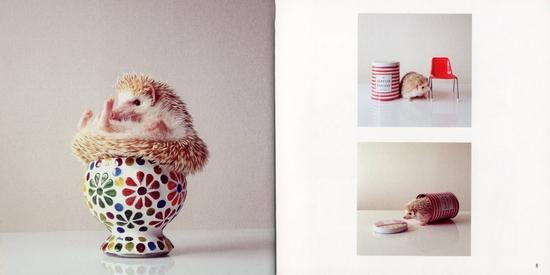 ハリネズミのダーシー Darcy the Flying Hedgehog