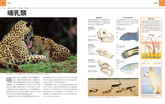 ビジュアル 動物大図鑑