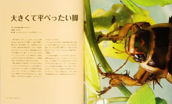 ビジュアル世界一の昆虫