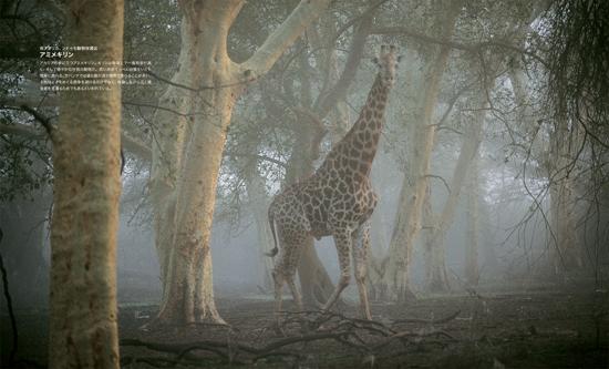 ナショナル ジオグラフィック傑作写真   ワイルドライフ 素顔の動物たち