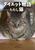 ダイエット物語……ただし猫