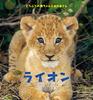 ライオン どうぶつの赤ちゃんとおかあさん
