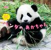 ほんとうの おおきさで みてみよう! パンダの あかちゃん