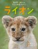 教科書にのってるどうぶつの赤ちゃん(1) ライオン